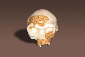 La reconstrucción completa y en 3D del cráneo del 'Homo antecessor'.